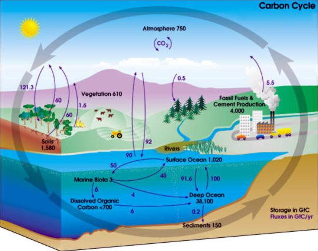 Ciclo do CO2 - carbono e meio ambiente